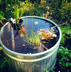 Building a Container Water Garden from @Green Bean
