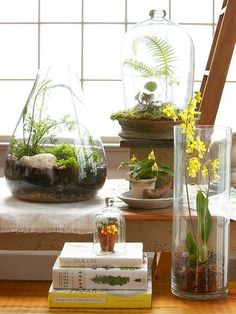 Here are the 12 terrarium plants and helpful tips that will make is easy to start your own terrarium: http://www.bhg.com/gardening/houseplants/projects/top-plants-for-terrariums/?socsrc=bhgpin011414terrariums