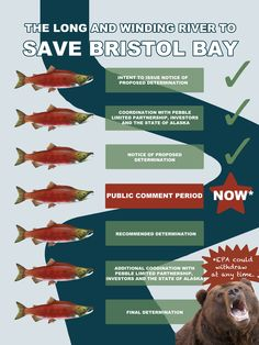 EPA has started the 404c process to stop the proposed Pebble mine - show your support for Bristol Bay salmon! http://bit.ly/1svPy1L