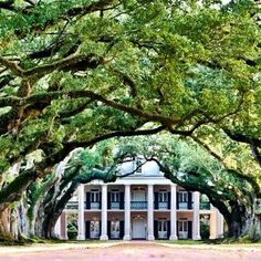 The #OakAlleyPlantation #Louisana #amazing love the #South #USA (at oak alley plantation)