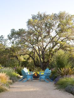 plant, fire pits, adirondack chairs, outdoor room, outdoor fireplaces, backyard, patios, san francisco, garden