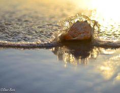 ocean beach, sea ocean, shell seashel, seashel photographi, beach shell, light