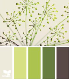 dill colors - kitchen