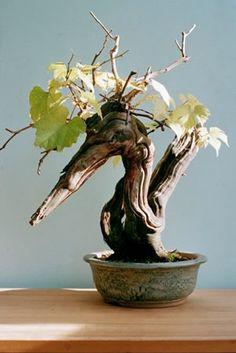Grape pelican bonsai