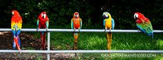 Parrots on the Road to Hana, Maui!