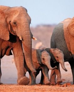 Elephant Family - South Africa