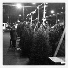 On 7th Avenue November 2012. Copyright © 2012 Jacqui Barrineau