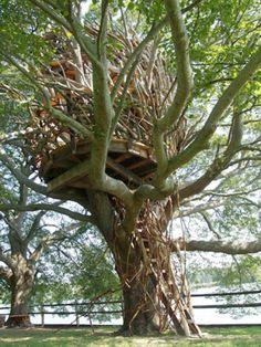 roderick romero tree houses - Google Search