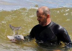 A Baby Dolphin Playing In The Waves