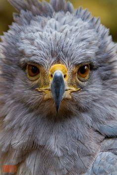 #birds #kuşlar #bird #kuş