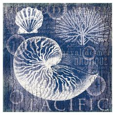 French typographic canvas print featuring a nautilus shell.  $24.95
