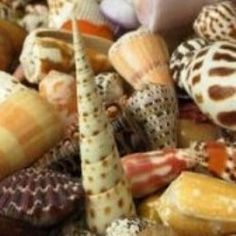 more sea shell crafts :-)