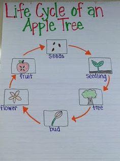 apple unit