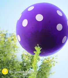 Now Available in PURPLE!!! Confetti Balloon Revealer for Gender Reveal Parties #genderreveal