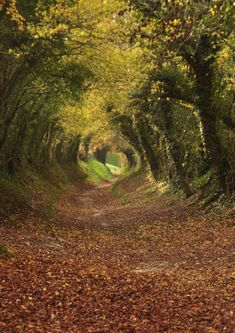 Footpath to Halnaker Mill, West Sussex. England