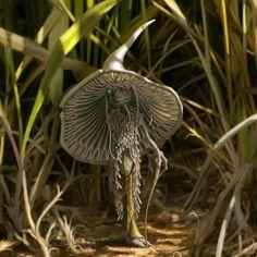 Mushroom Sprite magic, mushroomman, fantasi, mushroom man, faeri, art, fairi, garden, mushrooms