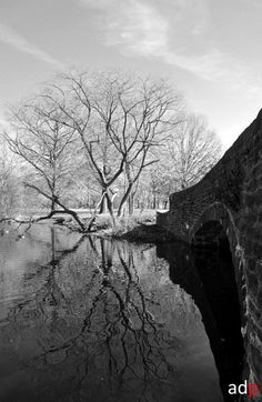 FDR park  http://fineartamerica.com/featured/reflections-of-natural-beauty-andrew-dinh.html