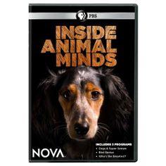 Nova: Inside Animal Minds DVD mind dvd