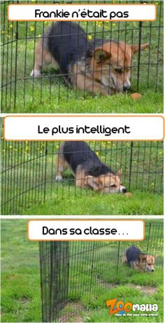 #dog #chien #pics #humor #humour #pet #animalerie