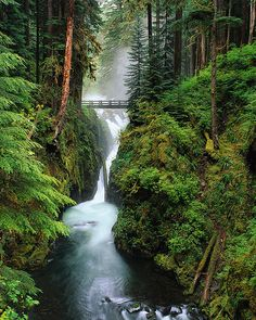 Hoh River cascading through rainforest, Olympic National Park, WA