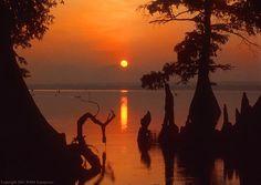 Reelfoot Lake, Tiptonville, TN