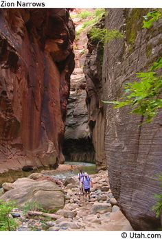 Zion National Park (Utah) - we hiked about 5 miles UP the river canyon.  most of the hike is in water that is between ankle deep and thigh deep water.  it's called 'hiking the narrows'...the walls of the canyon get very, very narrow in some sections.  absolutely one of my most memorable hikes of my life.  recommendation: if you do it, go to the gear rental place right outside the entrance to the national park and RENT the padded water hiking boots and a hiking pole.  there's little chance my ...