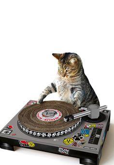 Cat Scratch : Cardboard DJ turntable scratching cat toy.