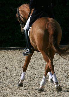 beauti hors, horseback ride, backgrounds, dream hors, horses english, divas, dance, boots, black