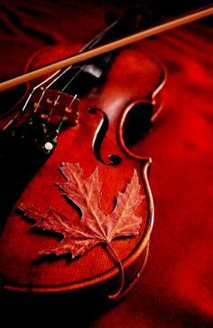 violin with leaf.