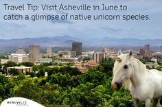 You'll never guess what one Asheville concierge did when a guest asked for a unicorn! Talk about customer service! | ExploreAsheville.com