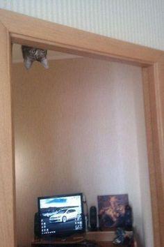 here kitty, kitty
