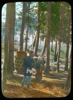Gathering dry leaves under the trees  Enami Studio Lantern Slide No : 542.  About 1920's, Japan