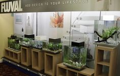 Fluval Edge Collection by Chris Farmer. Inspirational nano fish tank design.