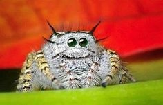 anim, spiders, funni, jump spider, natur, bug, insect, thing, happi spider