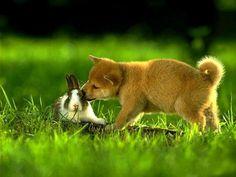 Little Friends..