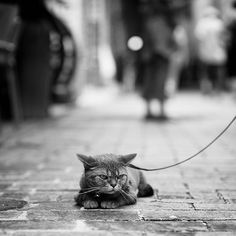 Cats don't go on walks.