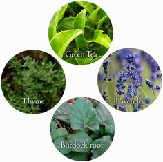 Herbs for Acne - on Growing your own Beauty Products Garden