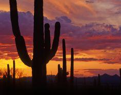 favorit place, arizona sunset, heart, cacti, futur adventur