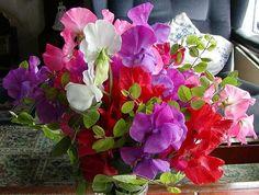 bouquet of sweetpeas