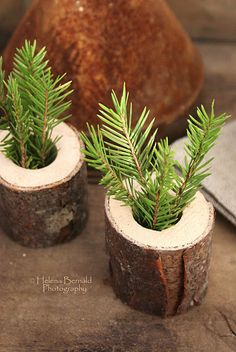 Wood piece and a sprig of spruce - love it!