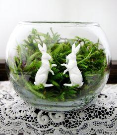 white rabbit terrarium