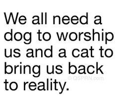 It's true! cats, anim, laugh, pet, funni, cat cat, humor, dog, quot