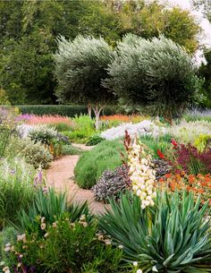 "Landscape designer Alan Fisher says, ""Water-wise gardening doesn't mean you have to plant only natives. There's a huge list of world-wide plants you can use to spectacular effect."" For more practical gardening advice, see our feature 75 Gardening Ideas (Page 135, Australian House & Garden, May 2013)"