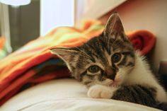 Virgola, quiet cat
