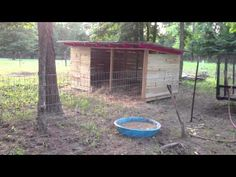 Miniature Pigs - Living on a Small Farm