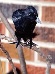 Faux Ravens - Quick-and-Easy Halloween Front Porch Update on HGTV