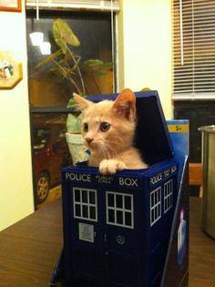 kitten in a TARDIS - your argument is invalid