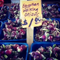 Egyptian Walking Onions Use as you would any onion.