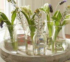 #plants #flowers #glass #green #indoors