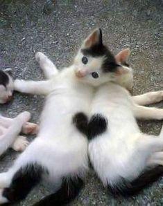 Kitteh love.